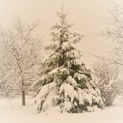 De la belle neige