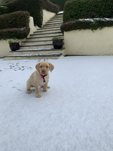 Snow Pup Tipperary, TA