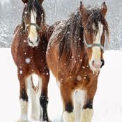 Frères d'hiver