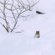 Le jour de l'écureuil