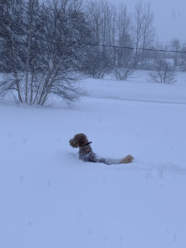 Snow days for dogs Miramichi, NB