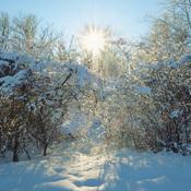 Du soleil et de la neige