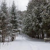 Paysage de la forêt en hiver