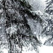 Heavy Wet Snowflakes