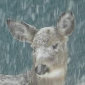 une tite neige
