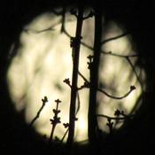 Lune du printemps!!
