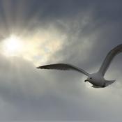 Percee de soleil