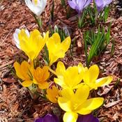 Un peu de couleur au printemps