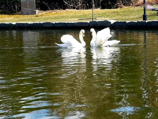 Bowring park st.johns nl Bowring Park, NL