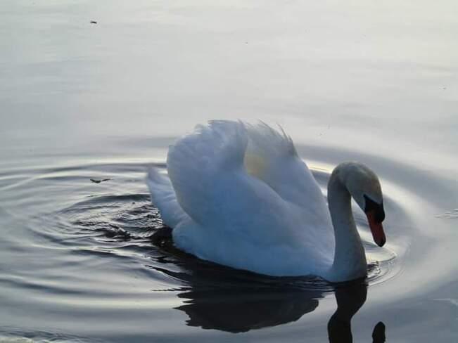swan Bayfront Park, ON