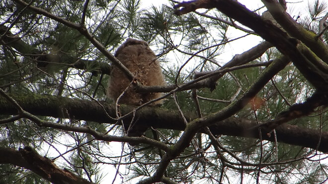 The Owl (Child) @ High Park High Park, Bloor Street West, Toronto, ON