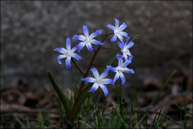 Petite fleurs Montréal, QC