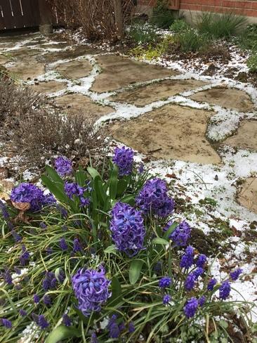 Snow Pellets Kitchener, ON