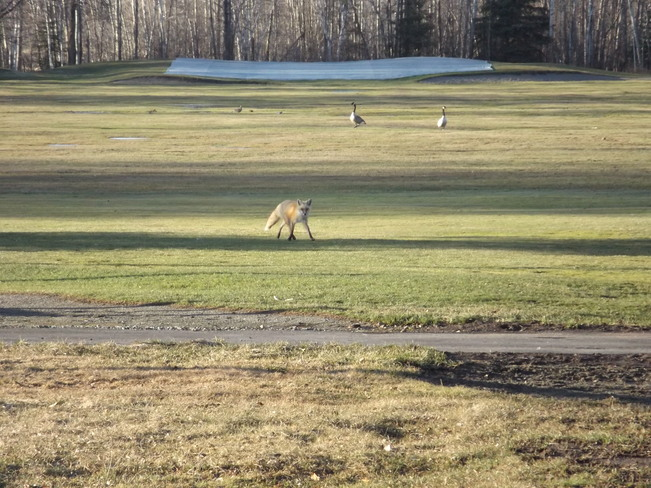 DUCK or GOOSE 430 Chapples Dr, Thunder Bay, ON P7C 4L7, Canada