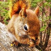 Un petit écureuil très mignon!