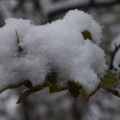 Photo de la neige avec les feuilles vertes