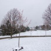 Encore de la neige au 22 avril ...