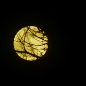 "April 26 2021 ""supermoon"" rises through the trees"