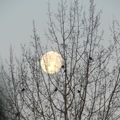 Full Moon March 2021