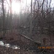 paysage en forêt