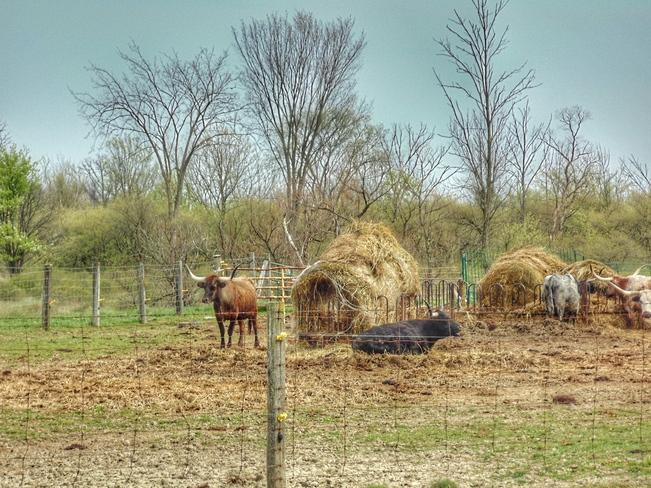 ON THE FARM Lambton County, ON