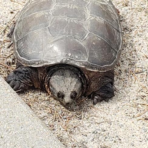 tortue au soleil Mont-Tremblant, QC
