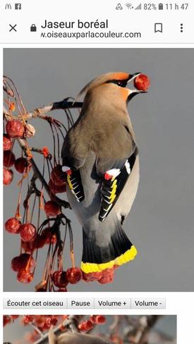 oiseau du Québec Drummondville, QC