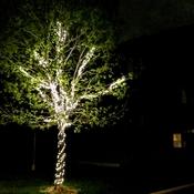 L'arbre illuminé
