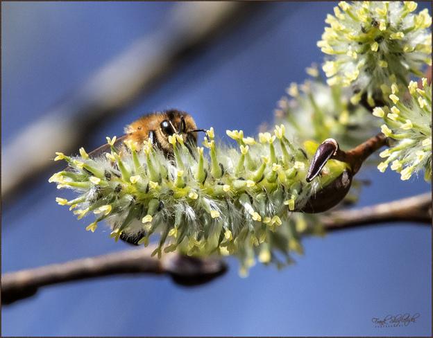 Busy Honey Bee Summer Village Of Parkland Beach, Township Road 422, Parkland Beach, AB