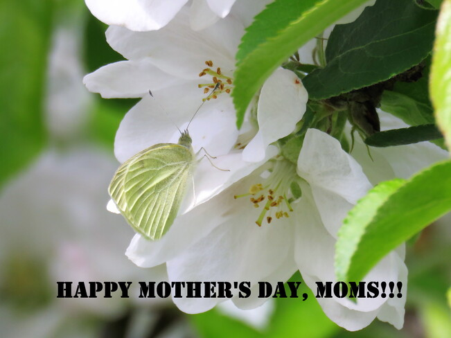 Happy Mother's Day! Nanaimo
