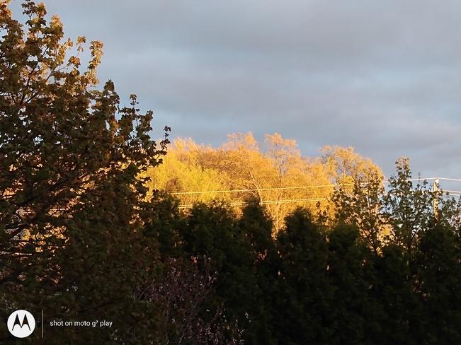 sunshine after rain Kitchener, ON
