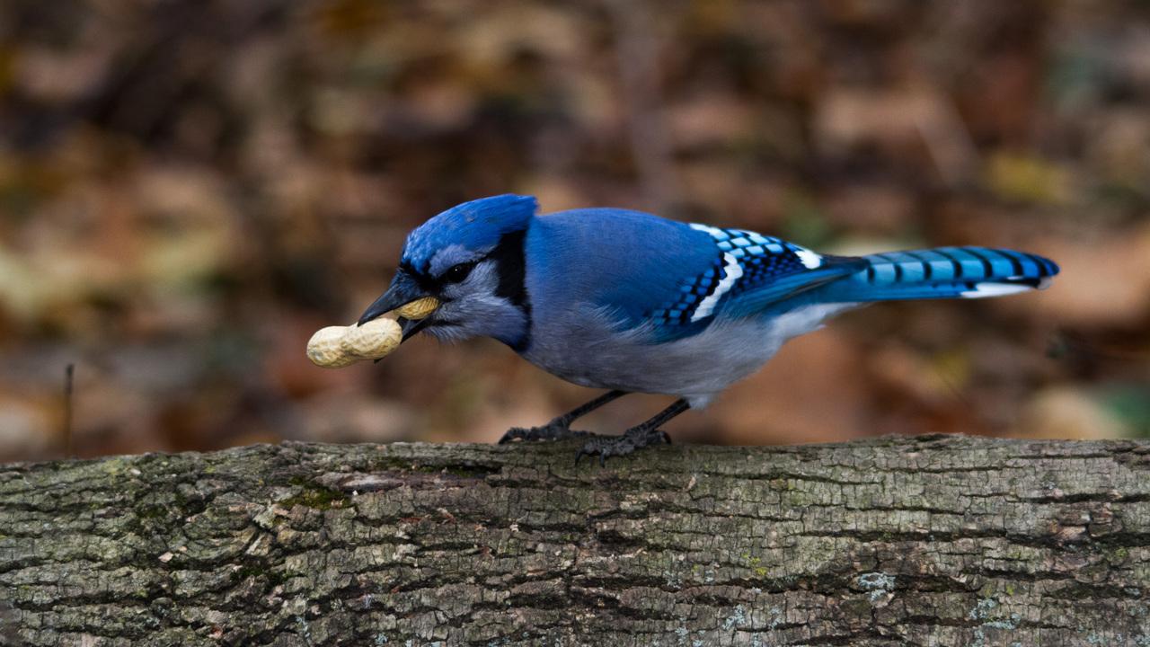 One Peanut Too Many?