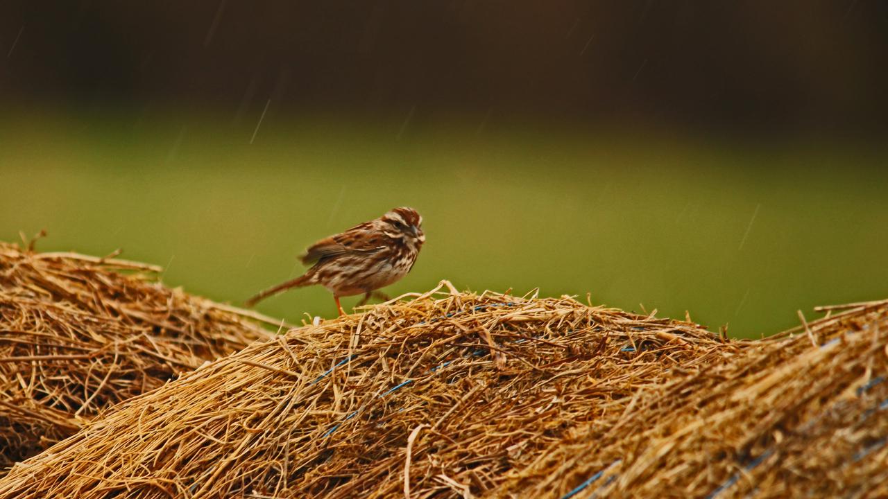 bird rain