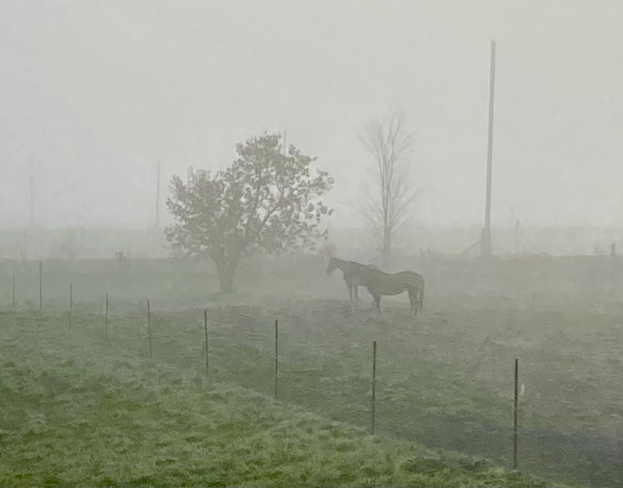 Misty morning in the Ottawa Valley Cobden, ON
