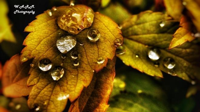 Raindrops Port Alberni, BC