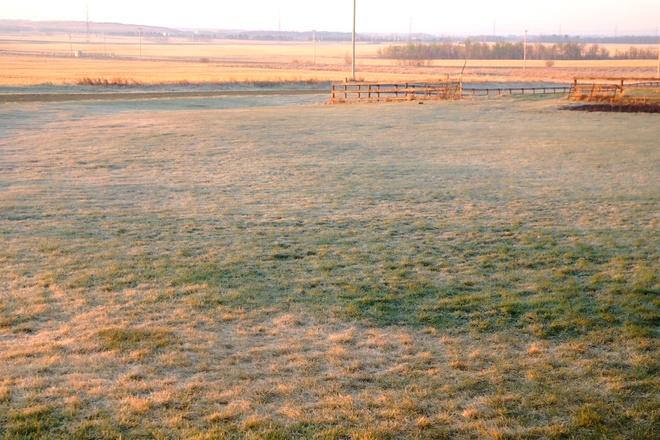Frosty Morning Near Leduc Leduc, AB