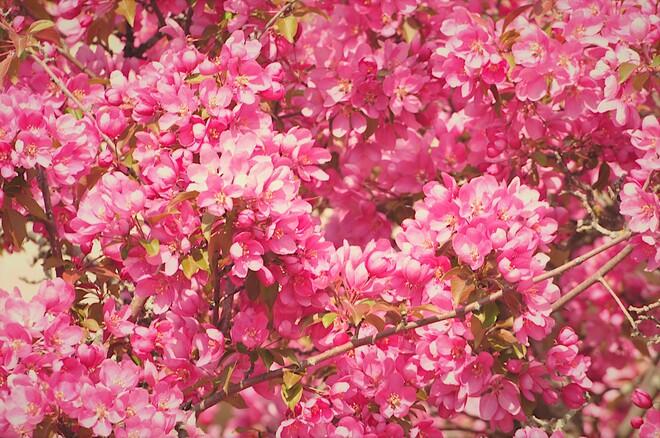 Le temps des fleurs Gatineau, QC