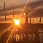 through the reeds
