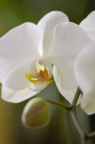 Who doesn't love Orchids? Georgetown, Halton Hills, ON