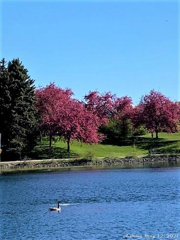 Loafers Lake Loafers Lake, Brampton, ON