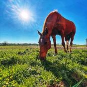 Blue sky. Green grass. Red horse.