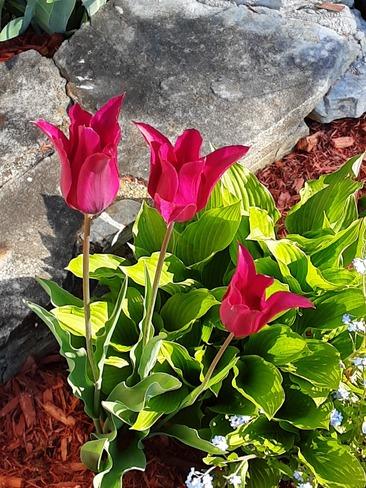 jolie rose Mercier, QC