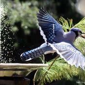 Ne me cherhez pas... je suis à la fontaine aujourd'hui!...