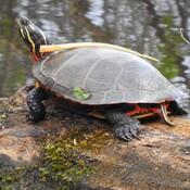 La nature reprend vie à Trois-Rivières