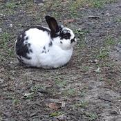 Le lapin du quartier