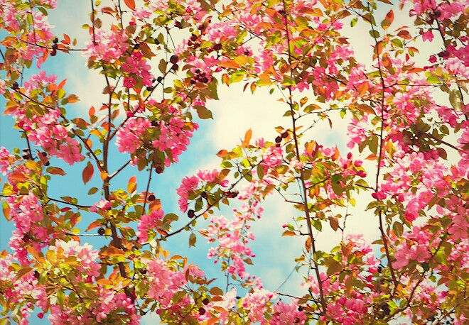 Les fleurs en vedette Gatineau, QC
