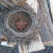 4 nouveaux née