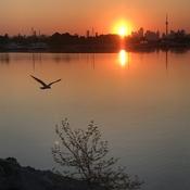 Sun n birds