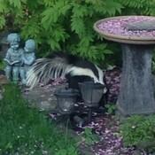 Garden visitor!