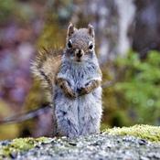 The Fairview squirrel